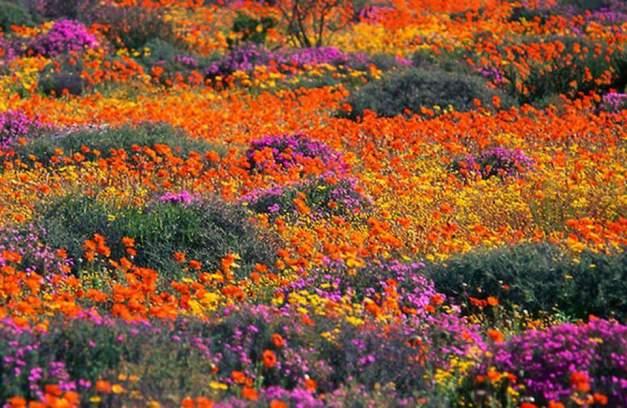 Namaqualand 1