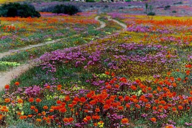 Namaqualand 2