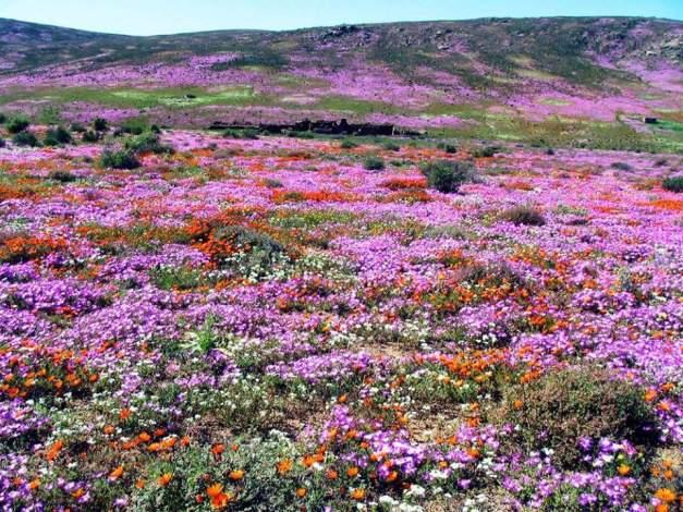 Namaqualand 3