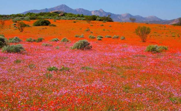 Namaqualand 4