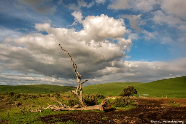 Fallen dead tree, 'Wagter in die Poort', and amazing cloud…