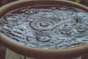 Raindrop storm in bird bath…
