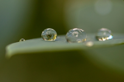 Raindrops on a leaf…