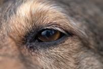 Kerneels' eye