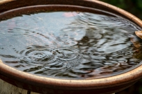 Interconnected concentric circles formed by the ripples of raindrops falling into the bird bath.