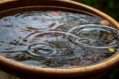 RaindrInterconnected concentric circles formed by the ripples of raindrops falling into the bird bath.