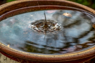 Funnel created by raindrop falling into water in bird bath.